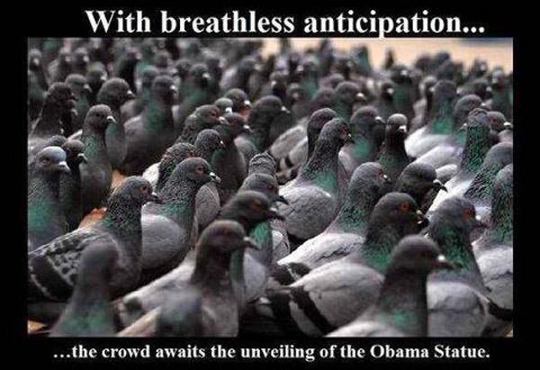 pigeonsplash.jpg