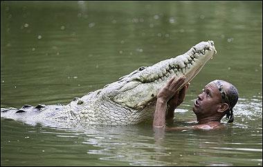 Man S Best Friend A 17ft Long Pet Crocodile Photos