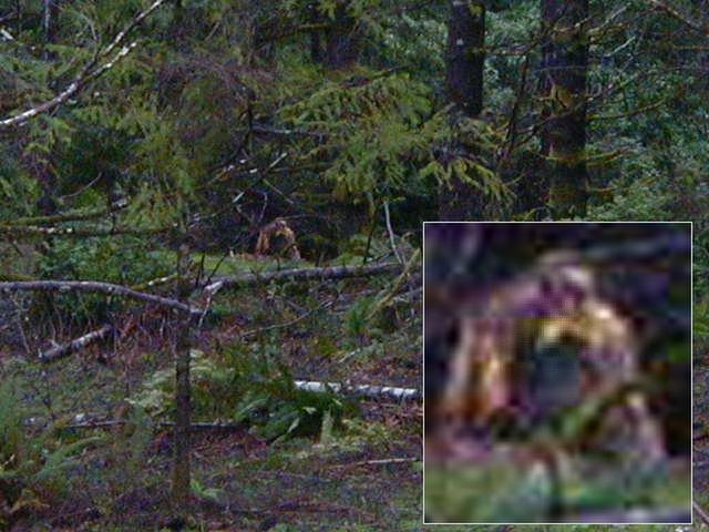 Играю в хоррор игру finding bigfoot, в которой мы должны найти жуткого и страшного етти в темном лесу!