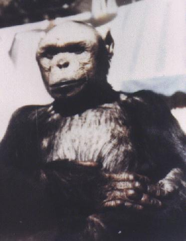 The Humanzee That Wasn't